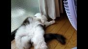 Вентилатор и готина котка
