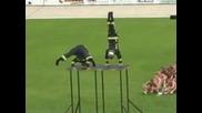 Poojarnikari gimnastici
