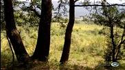 От гората към поляната