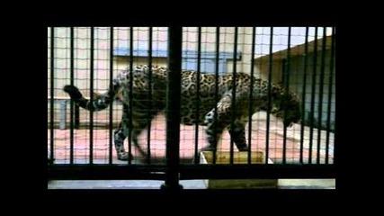 Зоопарк София 2012