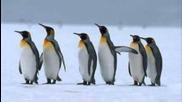 Песента за пингвините