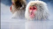 Дивата природа на Япония 1 (снежните маймуни и вулкани)