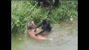 Пиян на талпа перко се сбива с маймуни в Бразилия
