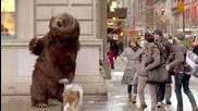 Hungry bear loose in Nyc- Гладна мечка на свобода в Ню Йорк :)))