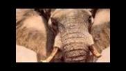 Animal Planet #1 Hd