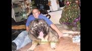 Jozo | Големите Кучета На Жозо (jozo) 2009