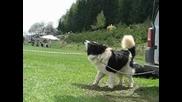 Кучета от р-к Калин