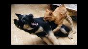 Cat Fight Dog Win