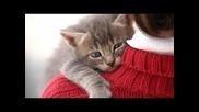 Най-гальовните котки:)