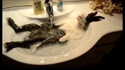 Заек си взима душ