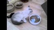 Дребосъка се нахрани и отива да почива...