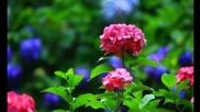 Цветя за вас
