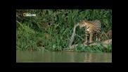 National Geographic. Неизвестната Бразилия /secret Brazil 2/3 /2012/ Сезонът на дъждовете