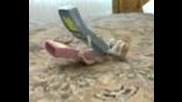 Как възниква рингтона на нокия