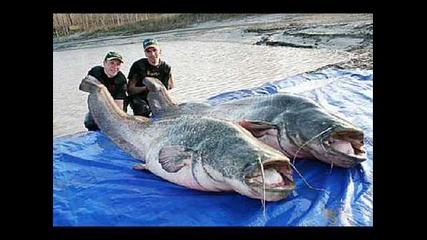 Най-големите риби