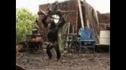 Шимпанзе с Ak-47 (автомат Калашников)
