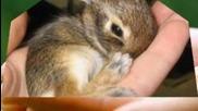 Най-сладките бебета животни на света!