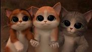 Котаракът в чизми и 3-те котета ! Котешки Небесни очи !