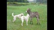 Магаре си играе с кучета