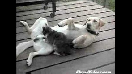 на такъв масаж и аз бих се зарадвал обаче не от котка -:ddddddddddddd