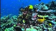 Грёзы Кораллового моря. Пробуждение