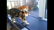 Котки спортуват!!!