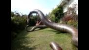 Най-голямата змия на Света ?? За 25 000 €