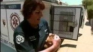 Animal Cops Phoenix: Mystery of the Missing Leg 2