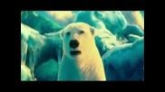 Coca - Cola - Сем. Полярномечкови [ Polar Bears Film 2013 ] - Бг Субс. & H D качество