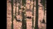 Лов на прасета на гонка
