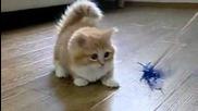 Най-сладкото Коте Което Може Да Видите