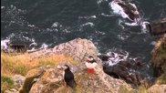 Mорският папагал - Фиордите на Норвегия