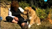 Темата на Нова - Българско овчарско куче