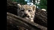 Малки бели леопарди