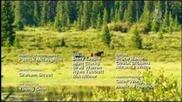 Дивите коне от Канадските Скалисти планини