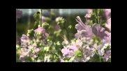 Simfonie De Culori- Симфония от цветове