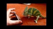 Хамелеон се плаши от iphone