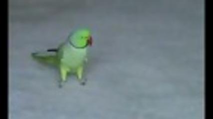 Удивителен папагал