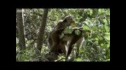 Funny Talking Animals - Walk on the Wild Side - Series 2, Episode 4, Preview - Bbc One