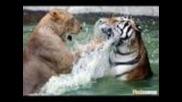 битки между животни част 1