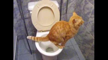 Cat go to the toilet xd so funny xd