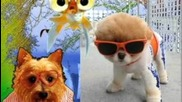 Animaux A Lunettes