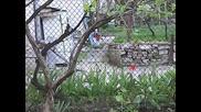 Ша-ша Къщичка за птици