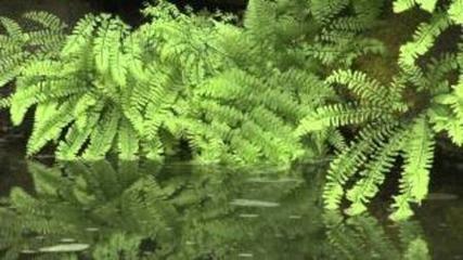 Living Landscapes: Zen Garden. 720p