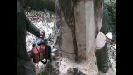 Mfr Aillevillers 70 - Capa Travaux Forestiers Bucheronnage - Abattage