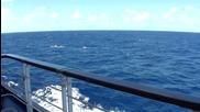 Релакс - морето от лайнер
