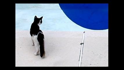 илюзия с басейн !