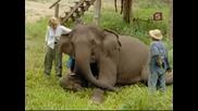 Звездите в света на животните - Мег Райан и Белите слонове
