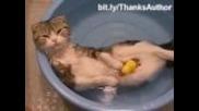 Смешни котки във вода !!!