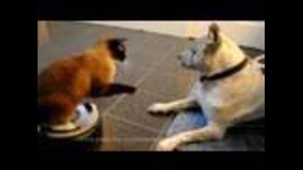 Котка напада питбул!